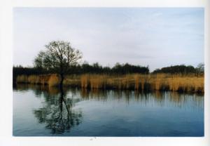 natuurcamping Zuid-Holland