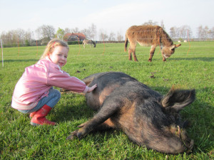 boerderijcamping Gelderland