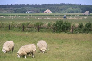 natuurcamping Texel