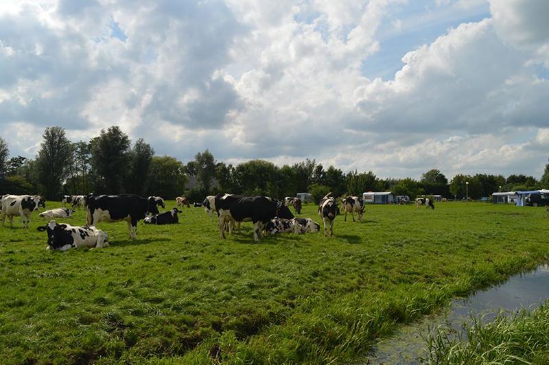 https://www.minicampingcard.eu/wp-content/uploads/2018/06/boerderij-in-functie-270x200.jpg