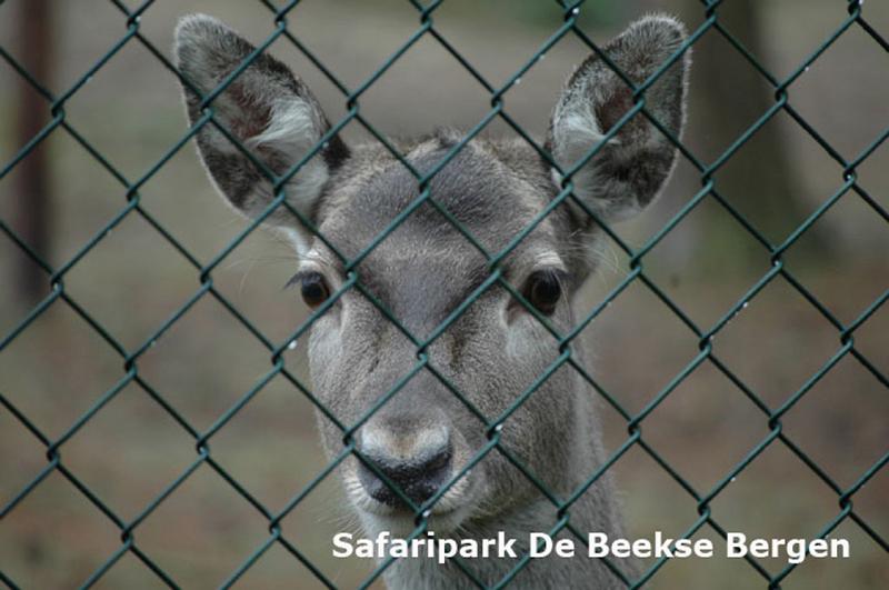 https://www.minicampingcard.eu/wp-content/uploads/2020/09/Beekse-Bergen-Safari-1-270x200.jpg