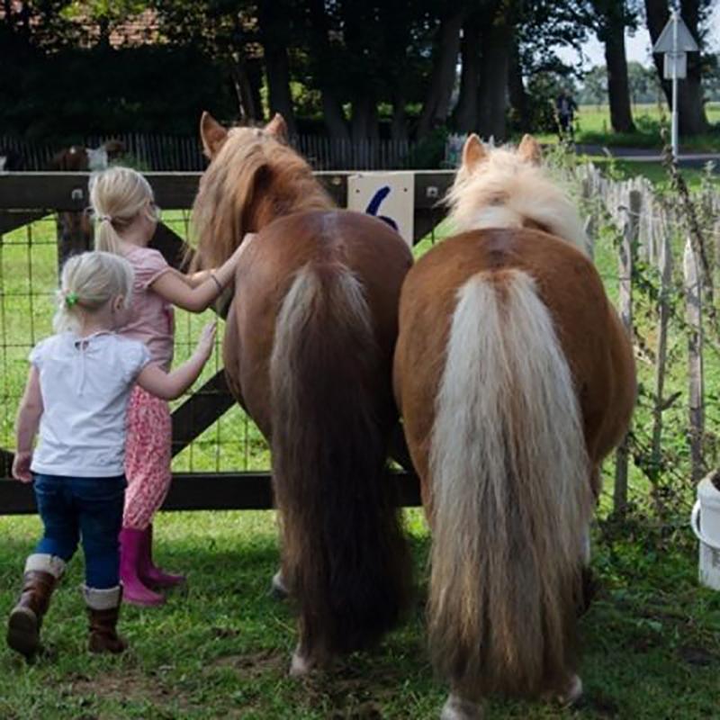 https://www.minicampingcard.eu/wp-content/uploads/2020/09/t_Ponys-boerderij-270x200.jpg